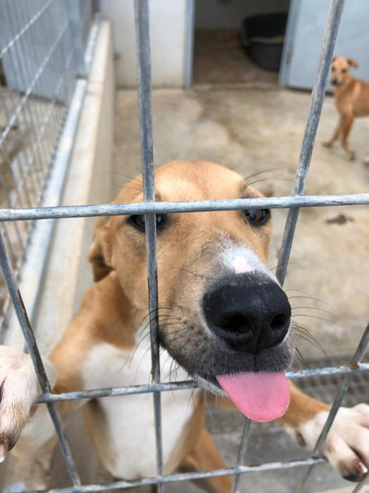 Galgo wants a home