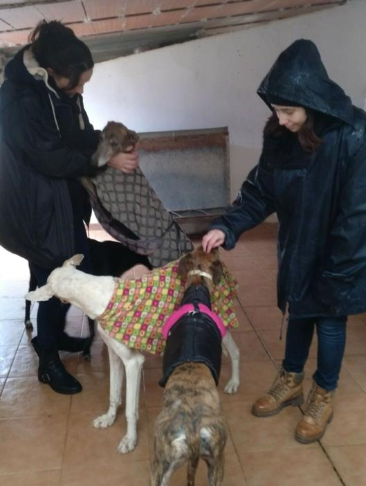 Tracey & Leigh with rescued galgos