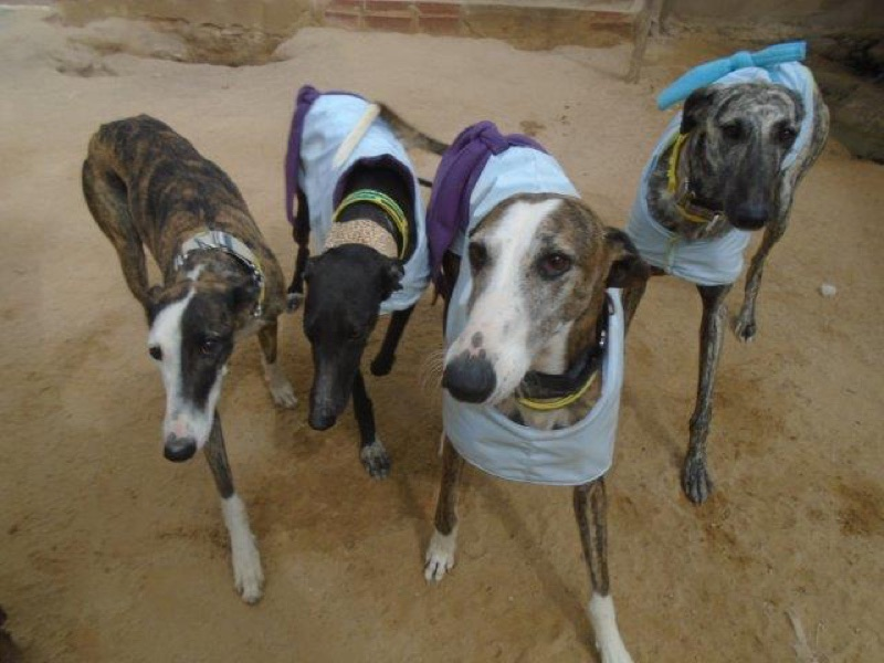 Galgos espera nuevas viviendas / Galgos waiting for new homes