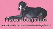 carlotta_galgos