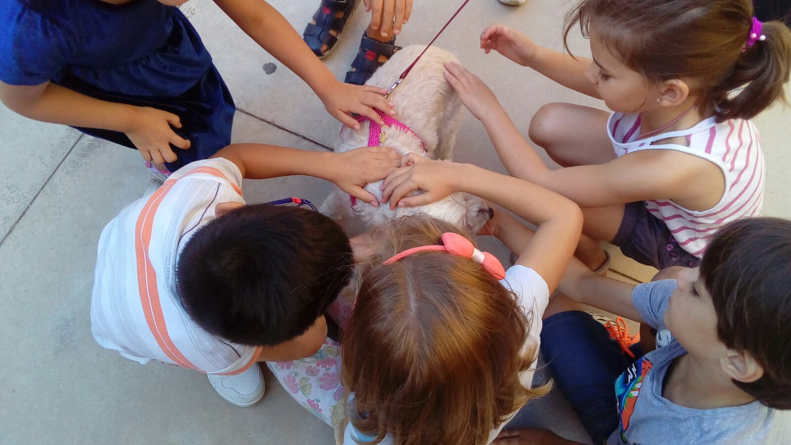Albacete summer school - Meeting the dogs