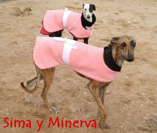 Sima y Minerva - galgo