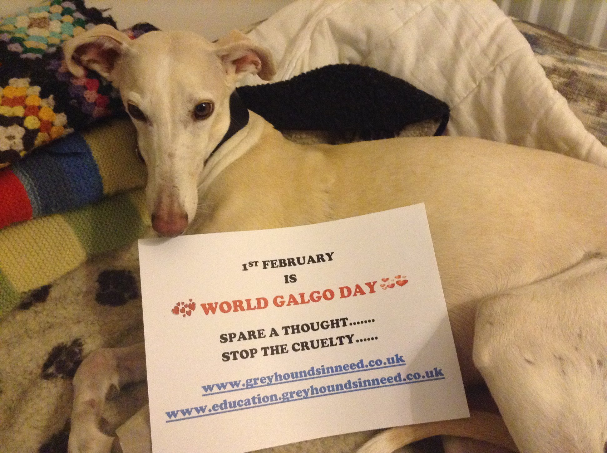 World Galgo Day