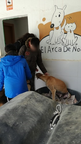 Arca de Noè shelter visits April 2019