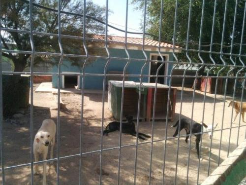 Refugio de rescate / Rescue shelter
